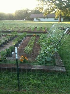Small Vegetable Gardens, Veg Garden, Vegetable Garden Design, Garden Types, Lawn And Garden, Garden Beds, Vegetables Garden, Vegetable Gardening, Container Gardening