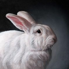 The White Rabbit, Oil painting miniature by Rebecca Luncan Watercolor Animals, Watercolor Art, Bunny Art, Bunny Bunny, Bunny Rabbits, Bunny Painting, White Rabbits, Rabbit Art, Funny Bunnies