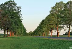 A linden allée at the Duke and Duchess of Rutland's Belvoir Castle, where Brown's largely unexecuted 1780 plans are being completed by the duchess with Brown expert John Phibbs