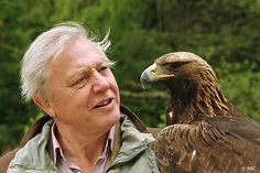 "David Attenborough with ""Tilly"" the Golden Eagle filming ""The Life of Brids"" 1999."