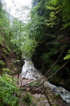 "Parcul National Apuseni - Padis: ""It's a must! Black Sea, Bulgaria, Garden Bridge, Hungary, Romania, Waterfall, Europe, Outdoor Structures, River"