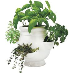 For herbs on the counter - Round Pot Planter - by Wind Weather - at Wayfair