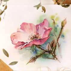 Image may contain: flower and plant Watercolor Cards, Watercolour Painting, Watercolor Flowers, Painting & Drawing, Watercolors, Plant Illustration, Watercolor Illustration, Botanical Art, Gouache