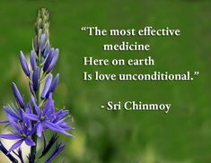 Quotes on love - Sri Chinmoy QuotesSri Chinmoy Quotes