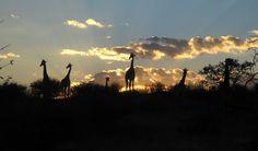 Super-fantastica #twitpic del #buongiorno: Alba nel Kalahari di Alessio