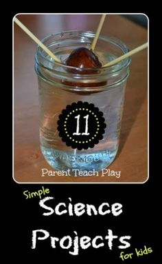 11 simple science projects to do with kids: Make paper, dissect a bean seed, make bubble solution, sprout an avocado, etc.