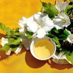 """Aujourd'hui, c'est """"à l'ombre des acacias"""" à l ombre des hibiscus ! 🍃🌸 ☀️…"""