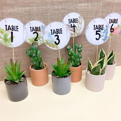 Obsessed with how my new table numbers turned out. Thanks for the idea 🌵 Pots are from Kmart and table number labels… Classroom Table Numbers, Classroom Labels, Classroom Decor Themes, Classroom Organisation, Classroom Design, Classroom Displays, Classroom Ideas, Classroom Arrangement, Classroom Board