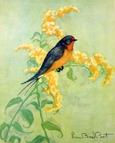 Two Beautiful Vintage Bird Prints, 1931 - The Baltimore Oriole - The Barn Swallow -Great to Frame - Fern Bisel Peat via Etsy