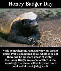 ❥ Honey Badger Day :)