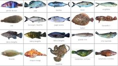poissons méditerranéens Pitt, Bbq, Vegetables, Montessori, Food, Images, Photos, Nature, River Fish