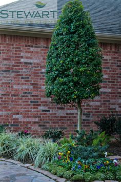 1000 images about a welcoming front yard on pinterest for Small trees for flower beds