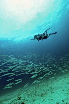 Diver with a  school of fish at Raya Island, Phuket, Thailand.