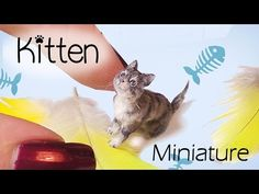 Miniature Cat Tutorial // Realistic Kitten Dollhouse DIY // SugarCharmShop - YouTube