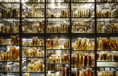 The glass menagerie: More than a million zoological species preserved in alcohol go on display at Berlin's Natural History Museum