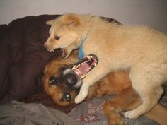 dogs are they playing or fighting