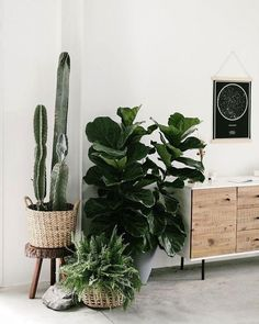 Schöne Gartengestaltung und Landschaftsideen You are in the right place about Cactus background Here we offer you the most beautiful pictures about th. art dibujo garden indoor plants drawing appartement bathroom home decor wood room decor Hanging Plants, Indoor Plants, Indoor Cactus, Fake Plants, Indoor Gardening, Elm West, Plantas Indoor, Design Jardin, Decoration Plante