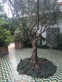 Badia Design Inc. has the largest inventory of Moroccan Tiles in Los Angeles including hand painted, cement, fez, mosaic, border and bejmat for indoor or outdoor use. Small Courtyard Gardens, Terrace Garden, Back Gardens, Outdoor Gardens, Garden Tiles, Patio Tiles, Cement Tiles, Mosaic Tiles, Outdoor Tiles Patio
