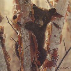 Colin Bogle Curious Cub II   WildlifePrints.com