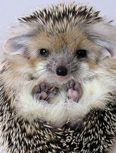 Aww. Even though this little guy is spiky he's so cute.