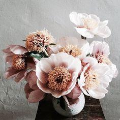 Flower Bomb | Shadowflower