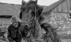 """Résultat de recherche d'images pour """"le cheval de turin bela tarr"""""""