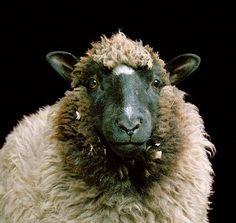 Farm series by Rob MacInnis http://ineedaguide.blogspot.com/2014/12/rob-macinnis.html #photography #animals