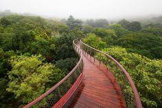 Ormanları yürüyerek keşfedeceğiniz bir geçit...  Cape Town, Güney Afrika.