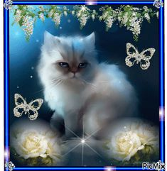 Beautiful Kittens, Cute Cats And Kittens, Baby Cats, Kittens Cutest, Baby Animals, Sweet Dreams Pictures, Good Night Funny, Kitten Images, Animated Heart