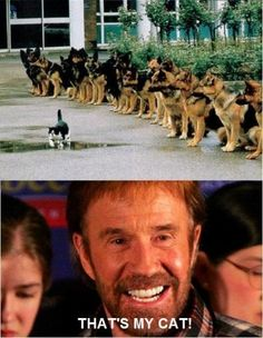 Chuch Norris Cat Meme | Slapcaption.com