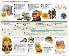 Pequeño resumen a modo de esquema de la evolución.