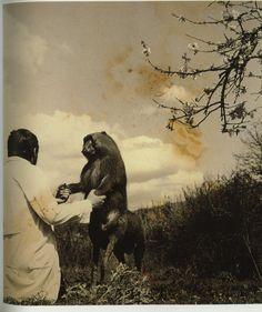 fontcuberta 03 671x800 Joan Fontcuberta et la vérité photographique photographie art