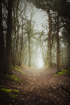 Horsford Woods - Pollution induced fog and mist by Matthew Dartford on Flickr.