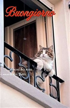 Pets, Anna, Good Morning Wishes, Cute Kittens, Thoughts, Bonjour, Italy, Animals And Pets