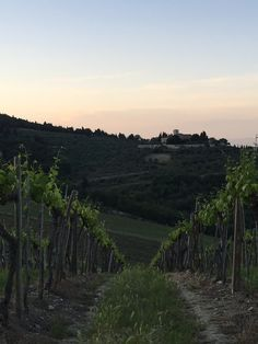 Vineyard, Mountains, Nature, Travel, Outdoor, Voyage, Outdoors, Viajes, Traveling