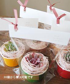 多肉植物/サボテン専門ストア solxsol - 多肉植物を使ったウェディングプチギフトをどうぞ