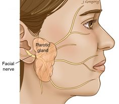 Is your aching ear because of the underlying tonsil stones? Know the working remedies to reduce tonsil stones ear pain naturally. Causes Of Ear Pain, Fibromyalgia Causes, Chronic Pain, Throat Pain, Clogged Ears, Parotid Gland, Tonsil Stones, Facial Nerve, Al Dente