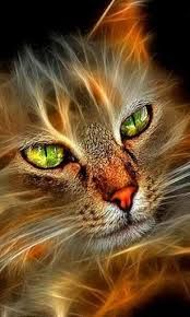 Just plain cool Beautiful Cats, Animals Beautiful, Beautiful Pictures, Neon Cat, Image Chat, Photo Chat, Colorful Animals, Animal Wallpaper, Cat Drawing