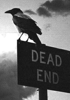 Find images and videos about dark, raven and dead end on We Heart It - the app to get lost in what you love. Raven Art, Bild Tattoos, Dead Ends, Crows Ravens, Southern Gothic, Arte Horror, Macabre, Dark Fantasy, Dark Art