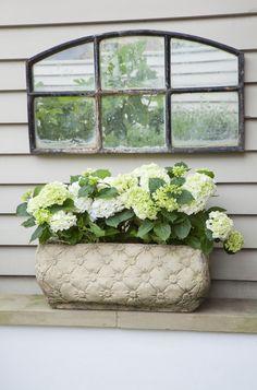 Leopoldina Haynes Garden: French window, cladding and white hydrangeas White Gardens, Small Gardens, Outdoor Gardens, Garden Mirrors, French Windows, Outdoor Flowers, Indoor Outdoor Area Rugs, Outdoor Living, Window Boxes