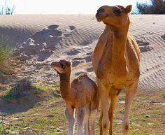 24 Fotos adoráveis de animais filhotes e seus pais