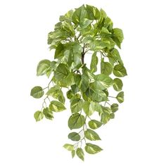 Artificial hanging pothos 23'' Pothos Plant, Green Plants, Artificial Plants, Palmiers, Houseplants, Bonsai, Decoration, Plant Leaves, Herbs