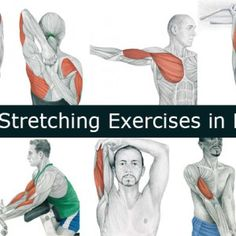 16 Arm Stretching Exercises in Pictures!