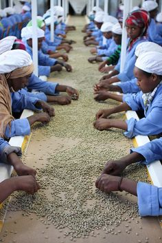 Hand sorting coffee beans in Ethiopia