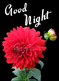 Good Night Thoughts, Good Night Love Messages, Lovely Good Night, Good Night Flowers, Sweet Night, Good Night Sweet Dreams, Good Night Image, Good Morning Good Night, Good Night Quotes
