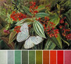 color palettes christmas - Pesquisa Google