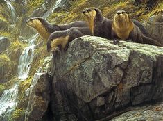 Image detail for -Robert Bateman Paintings, Art Painting, Wild Animals Paintings, on the ...