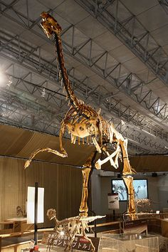 fossils - Gigantoraptor - late cretaceous period, 70m years old #dinosaurs