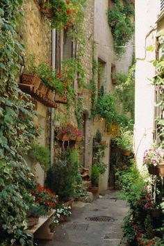 Mougins ~ Provence-stayed in Mougins with Jason-just one of many picturesque villages in Provence. #green #vert #Mougins #Provence #France #south #tourismpaca #tourismepaca