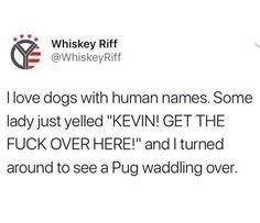 #kevin #pug #pugs #pugdogs #cuteaf  #kevin #pug #pugs #pugdogs #cuteaf pug dogs pets Pug Dogs, Pugs, Pug